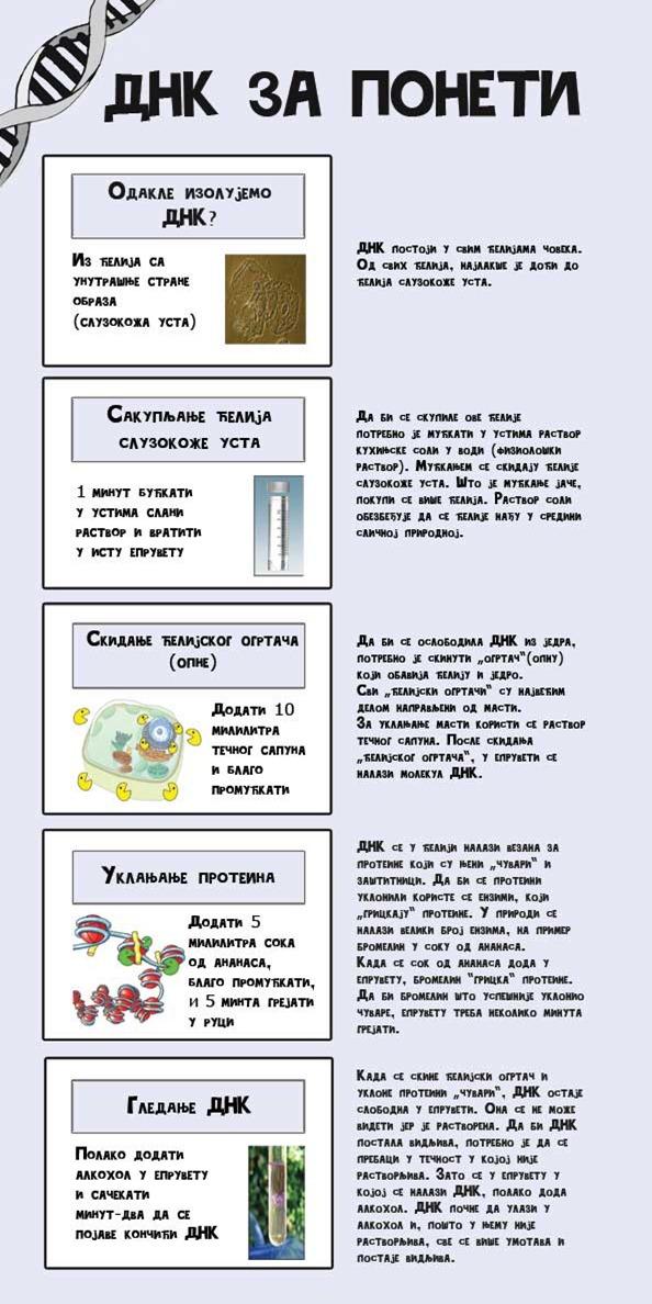 DNK_za_poneti_2